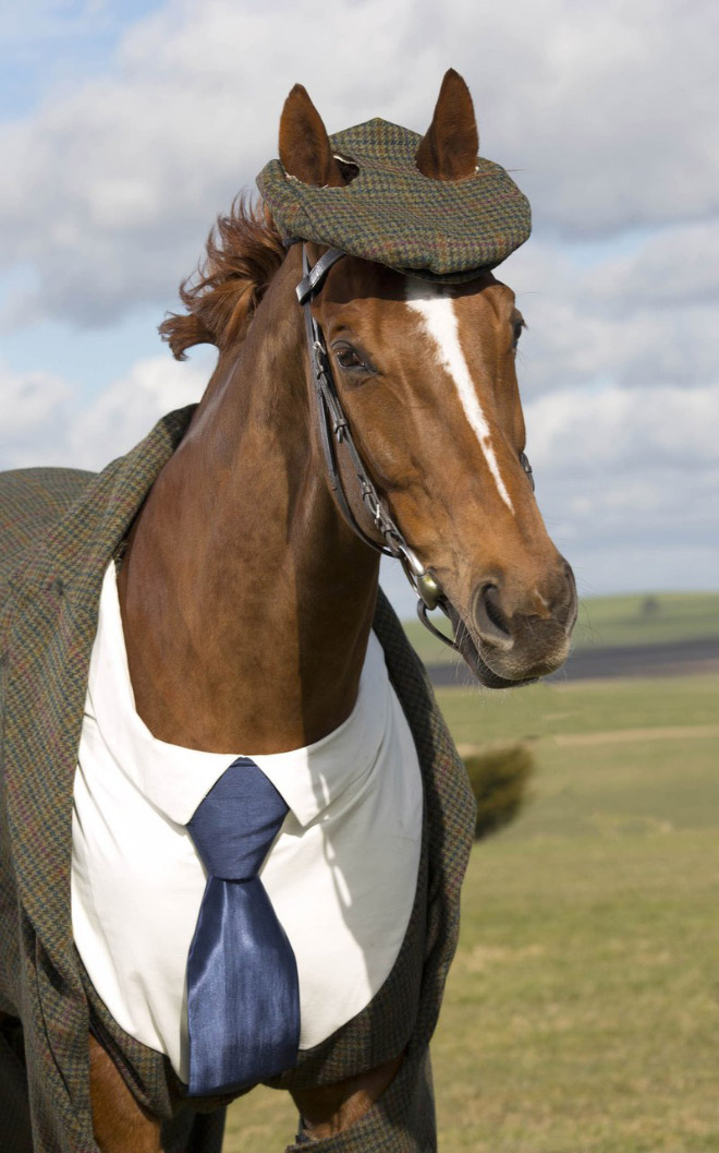 Horse in a suit.