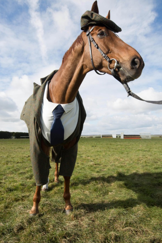 Horse in a suit!