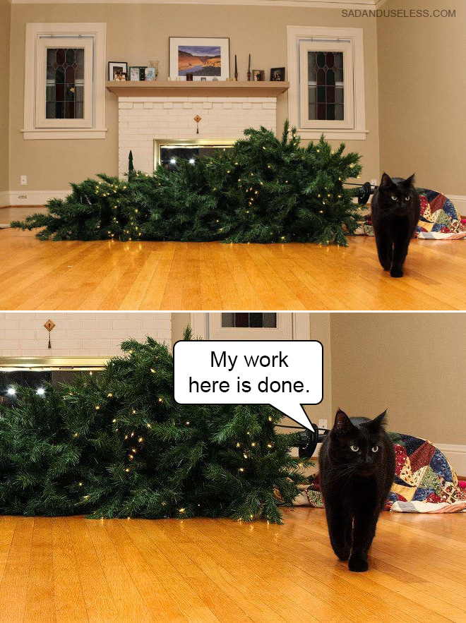 Cats are jerks.