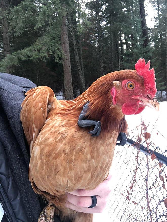 T-Rex chicken arms.