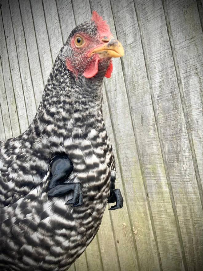 T-Rex chicken 3D printed arms.