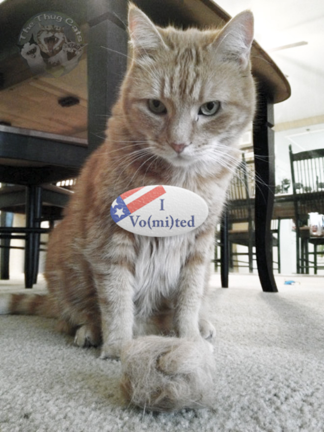 Proud cat who voted.