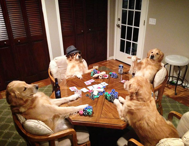 These dogs have no idea what they are doing.