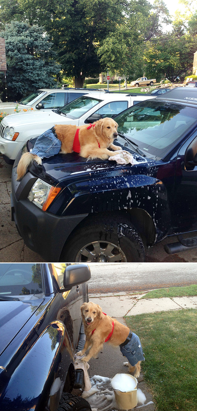 This dog has no idea what she's doing.