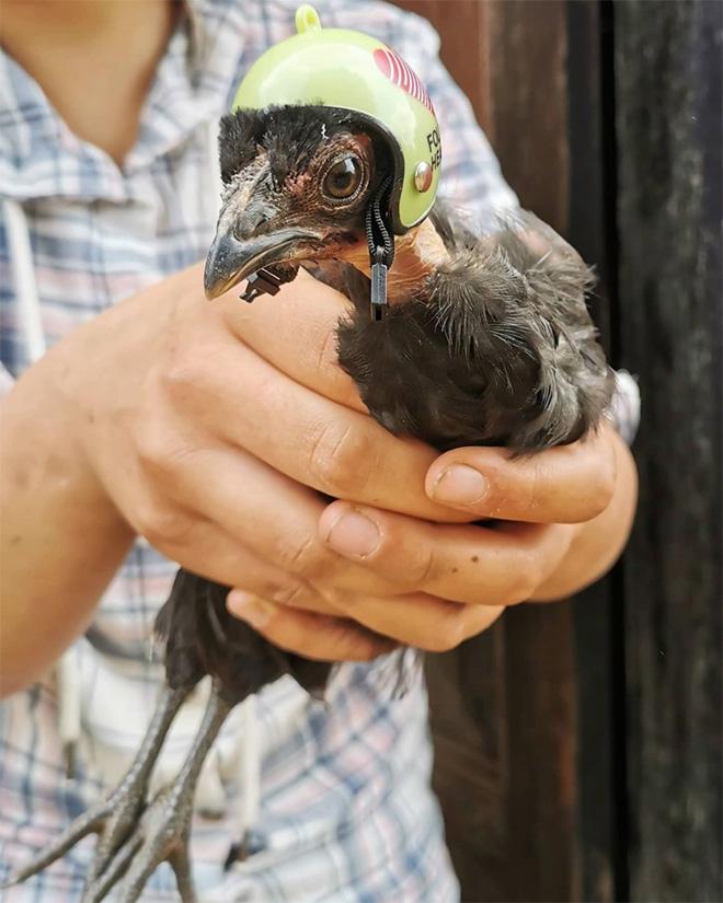 Chicken helmet.