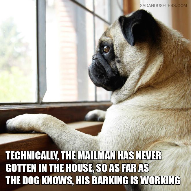 Technically, the mailman has never gotten in the house, so as far as the dog knows, his barking is working.