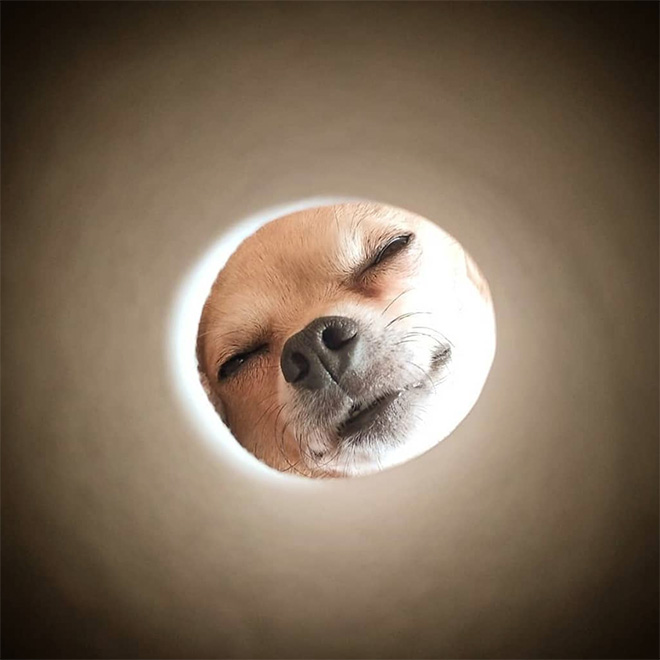 Toilet paper roll Moon photo.