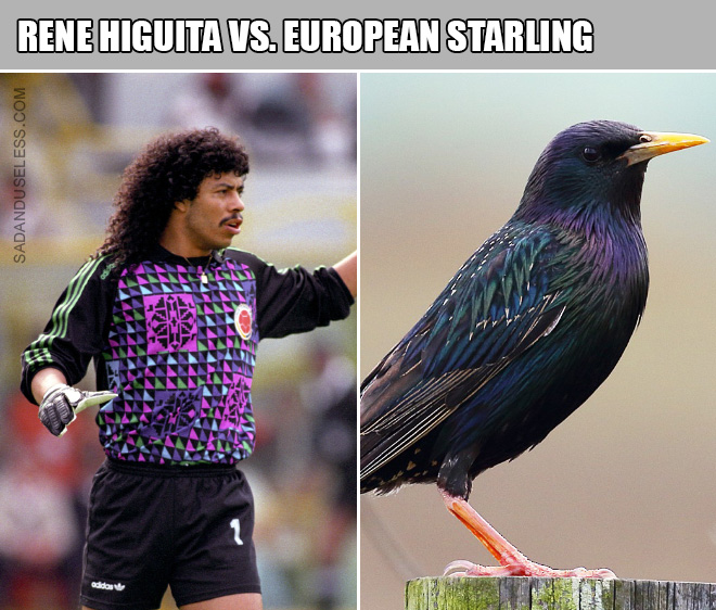 90s goalkeepers really do look like birds.