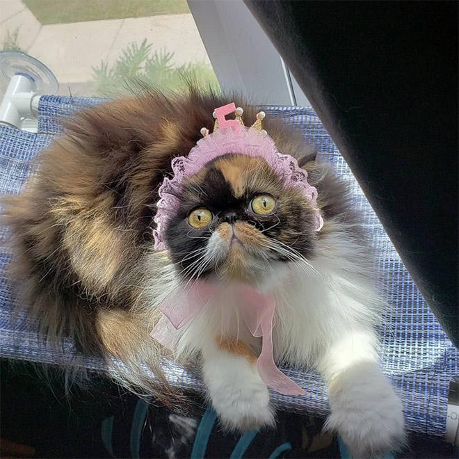 Cat bonnet.