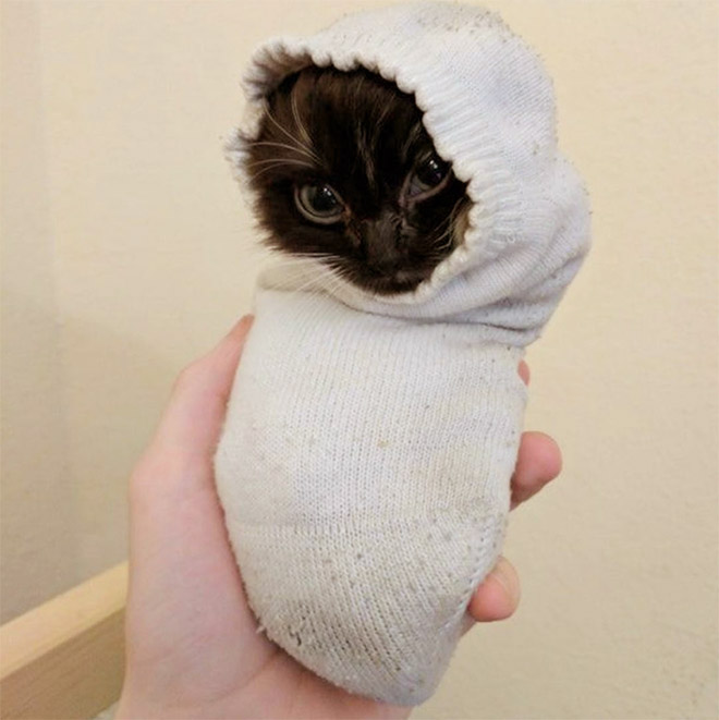 Cat in a sock.