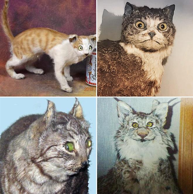 Cat taxidermy fail.