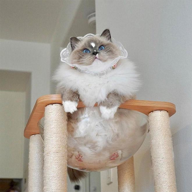 Cat in a glass bowl.