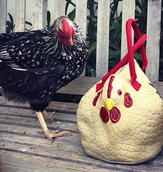 Chicken bag is awesome!