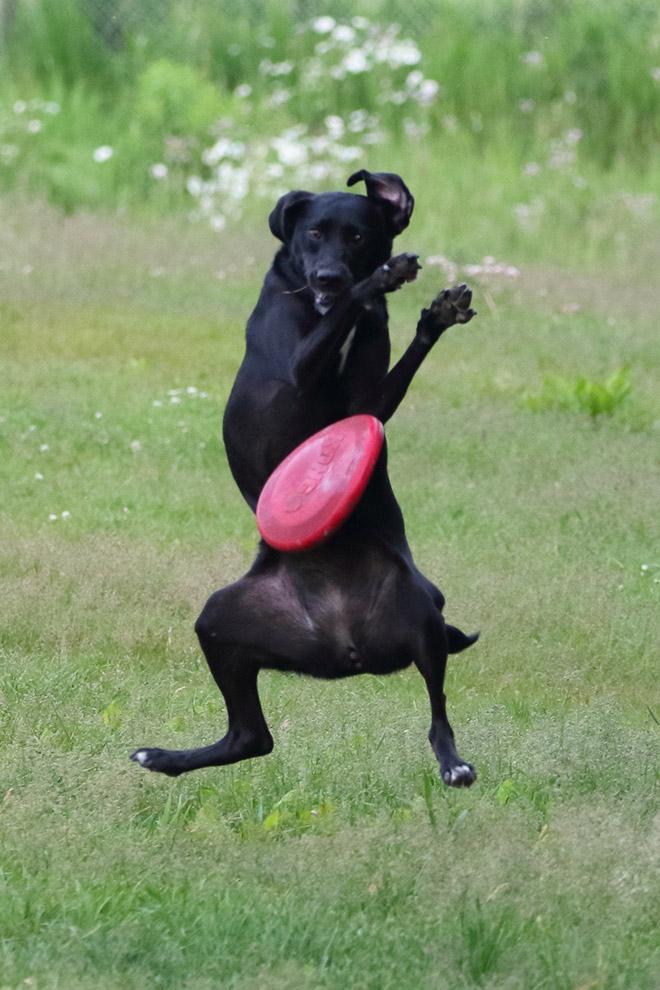 Frisbee catch fail.