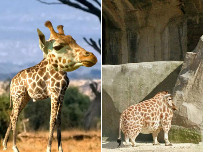 Animals without necks are hilariously weird.