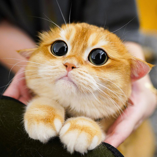 The cutest cat eyes ever.