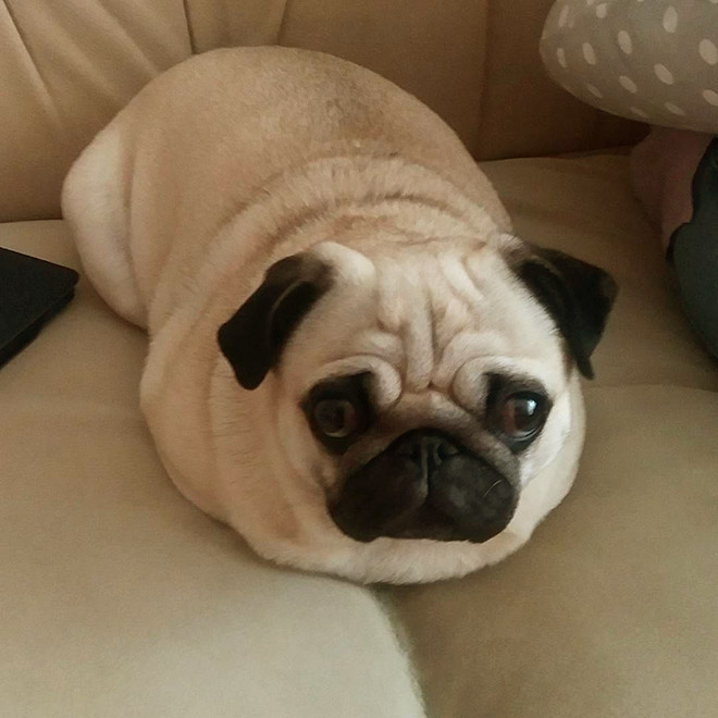 Pug loaf is the cutest type of bread.