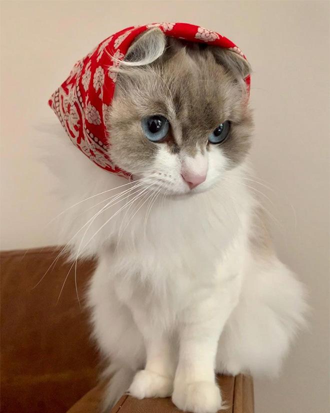 Babushka cat.