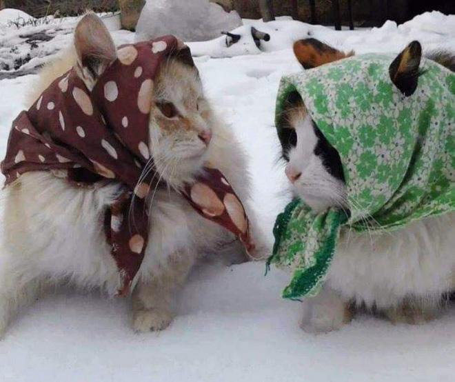 Babushka cats.