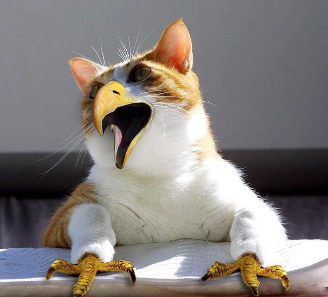 Cats + Birds = Cirds.
