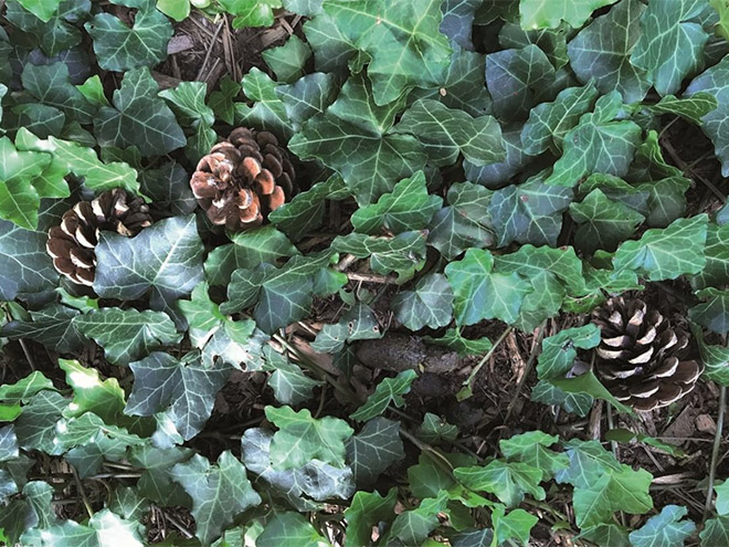 Can you find dog poo in this photo?