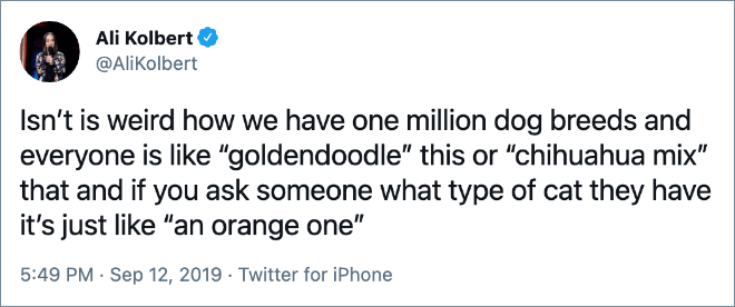 "Isn't is weird how we have one million dog breeds and everyone is like ""goldendoodle"" this or ""chihuahua mix"" that and if you ask someone what type of cat they have it's just like ""an orange one"""