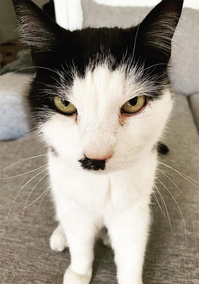 Kitlers: cats that look like Hitler.