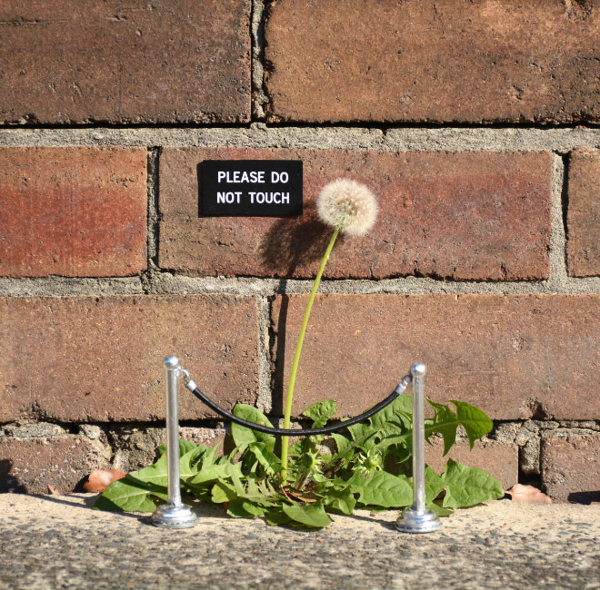 Clever little sign by artist Michael Pederson.