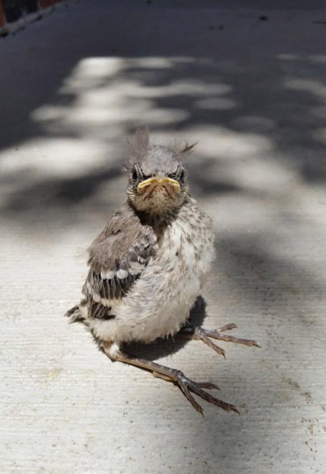 grumpy-birds5.jpg