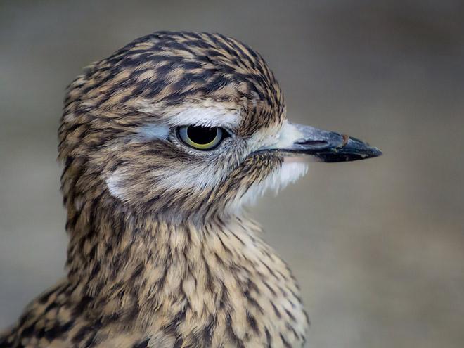 Grumpy bird.