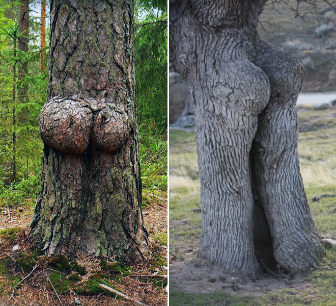 Tree butts.