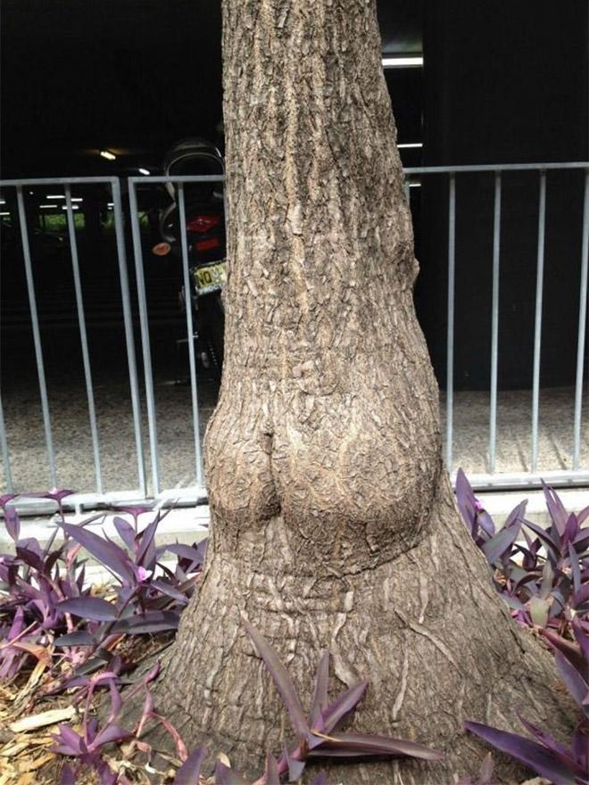 Tree butt.