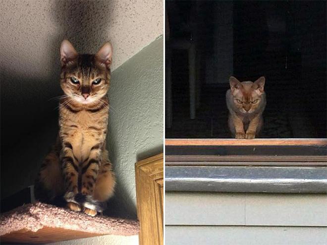 Silently plotting your murder.
