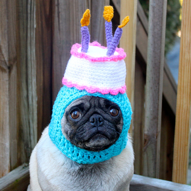 Sad pug in a crocheted hat.