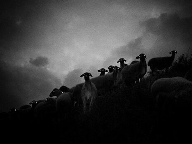 Sheep at night look terrifying.