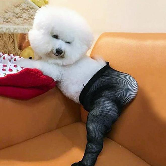 Fishnet stockings for dogs.
