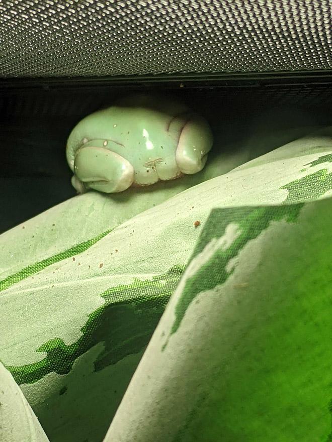 Green frog butt.