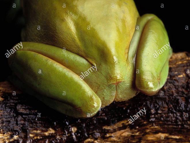 Frog butt.