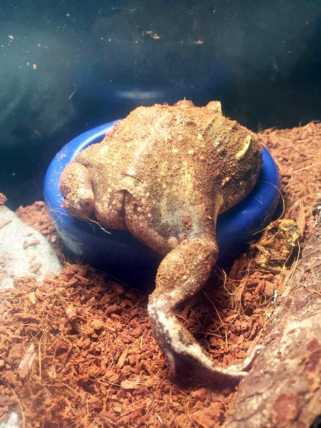 Funny frog butt.