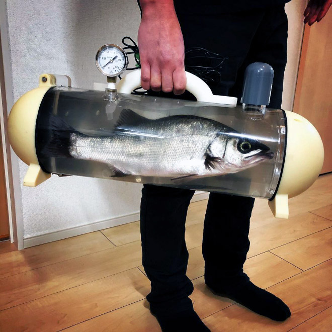 Bag for taking your pet fish for a walk.