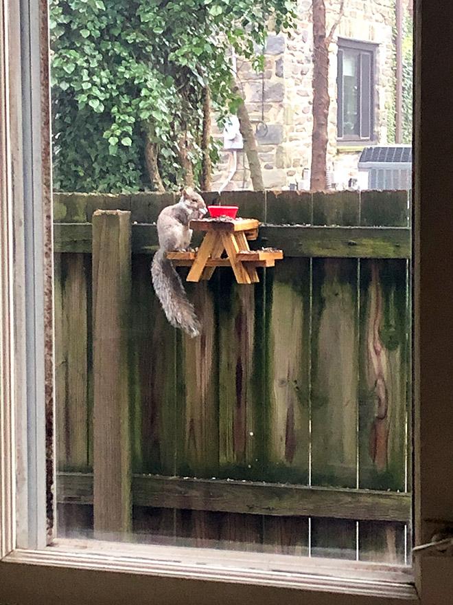 Squirrel having a picnic.