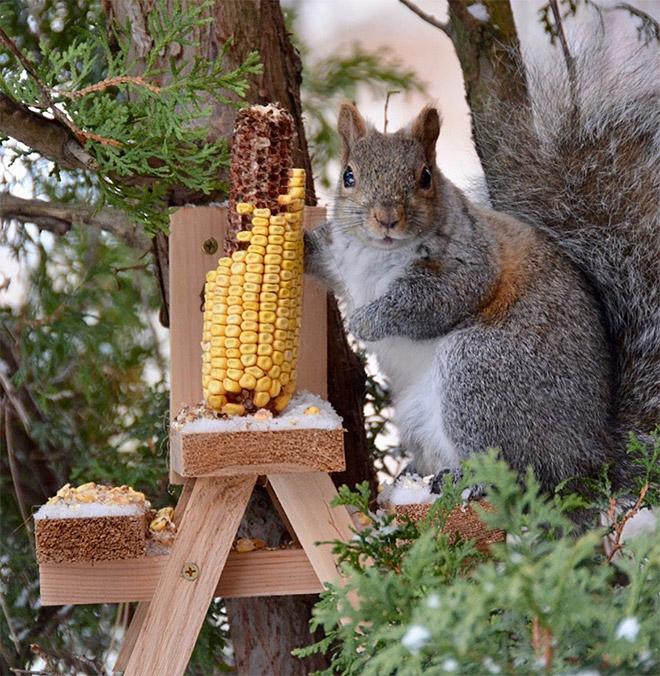 Picnic table feeder.