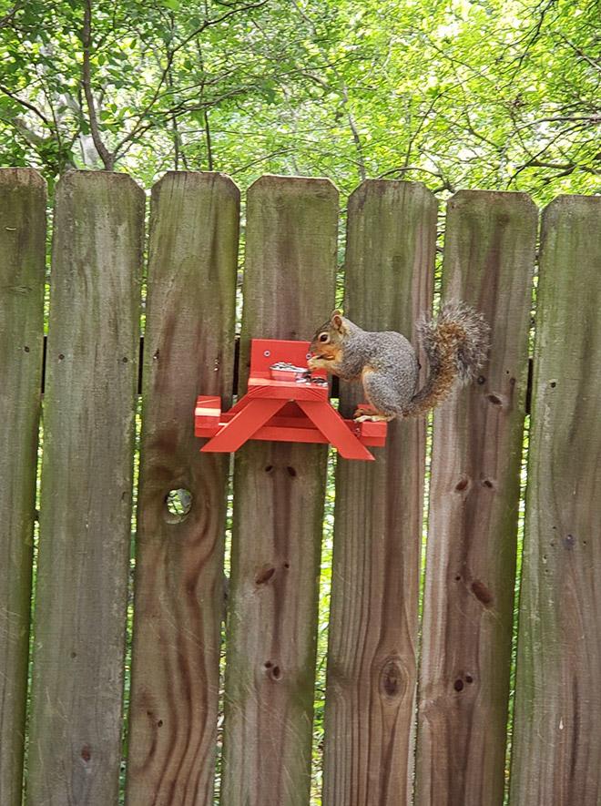 Picnic table squirrel feeder.