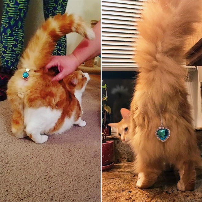 Twinkle Tush cat butt bling.