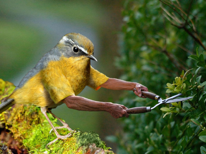 Birds with human arms are fun to look at.