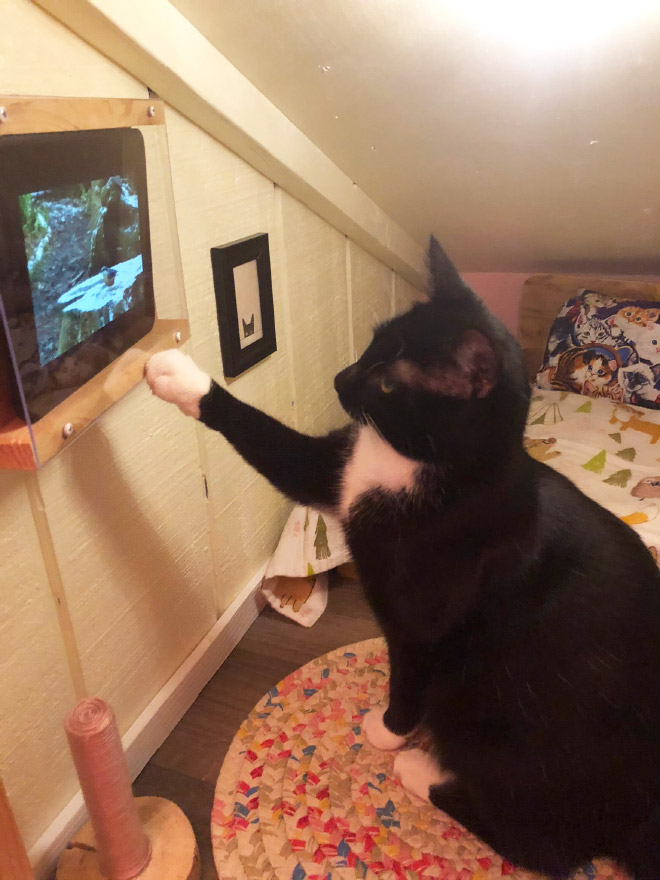 Тази котка обича да гледа телевизия.