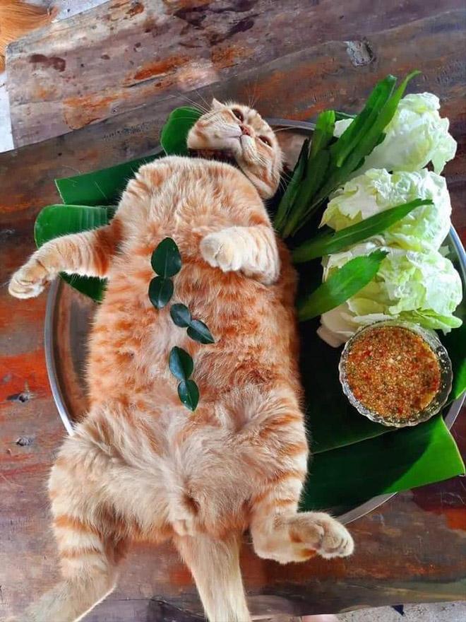 Délicieuse recette de chat.