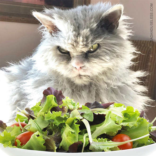 Salad? How dare you?!