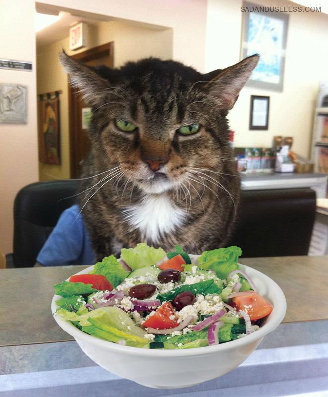 This cat hates salad.