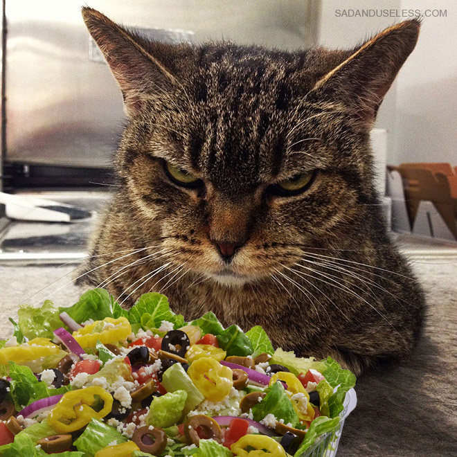 He hates you and he hates salad.